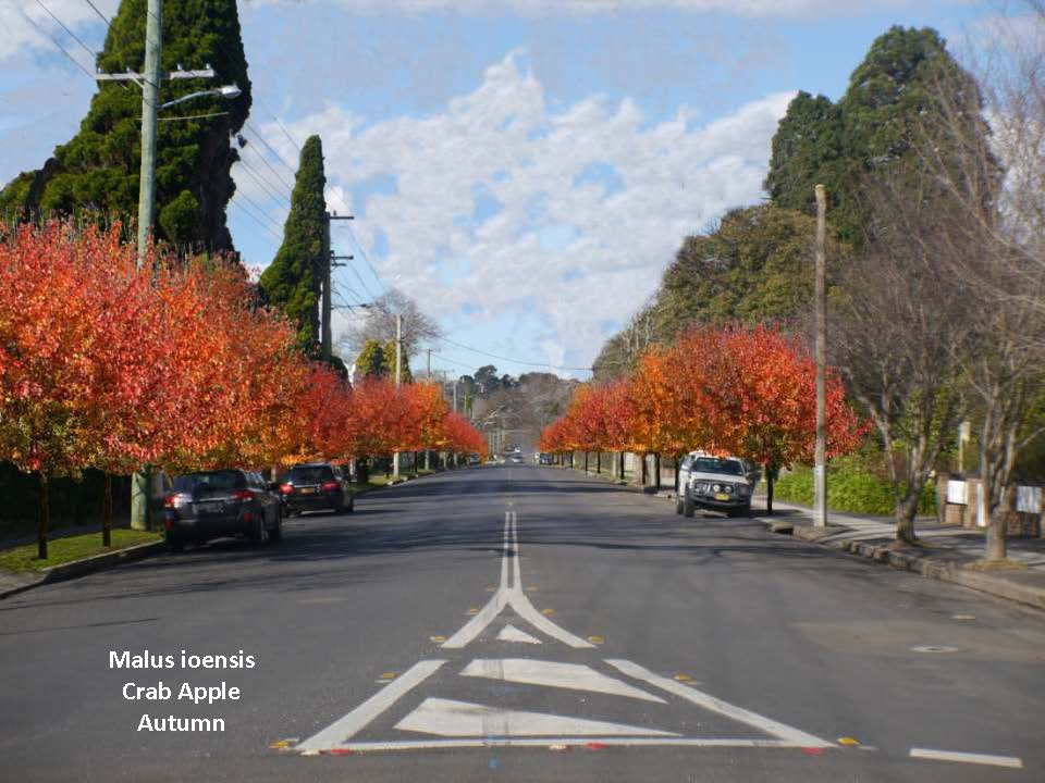 Merrigang Street Trees_Charlotte Webb_Page_08