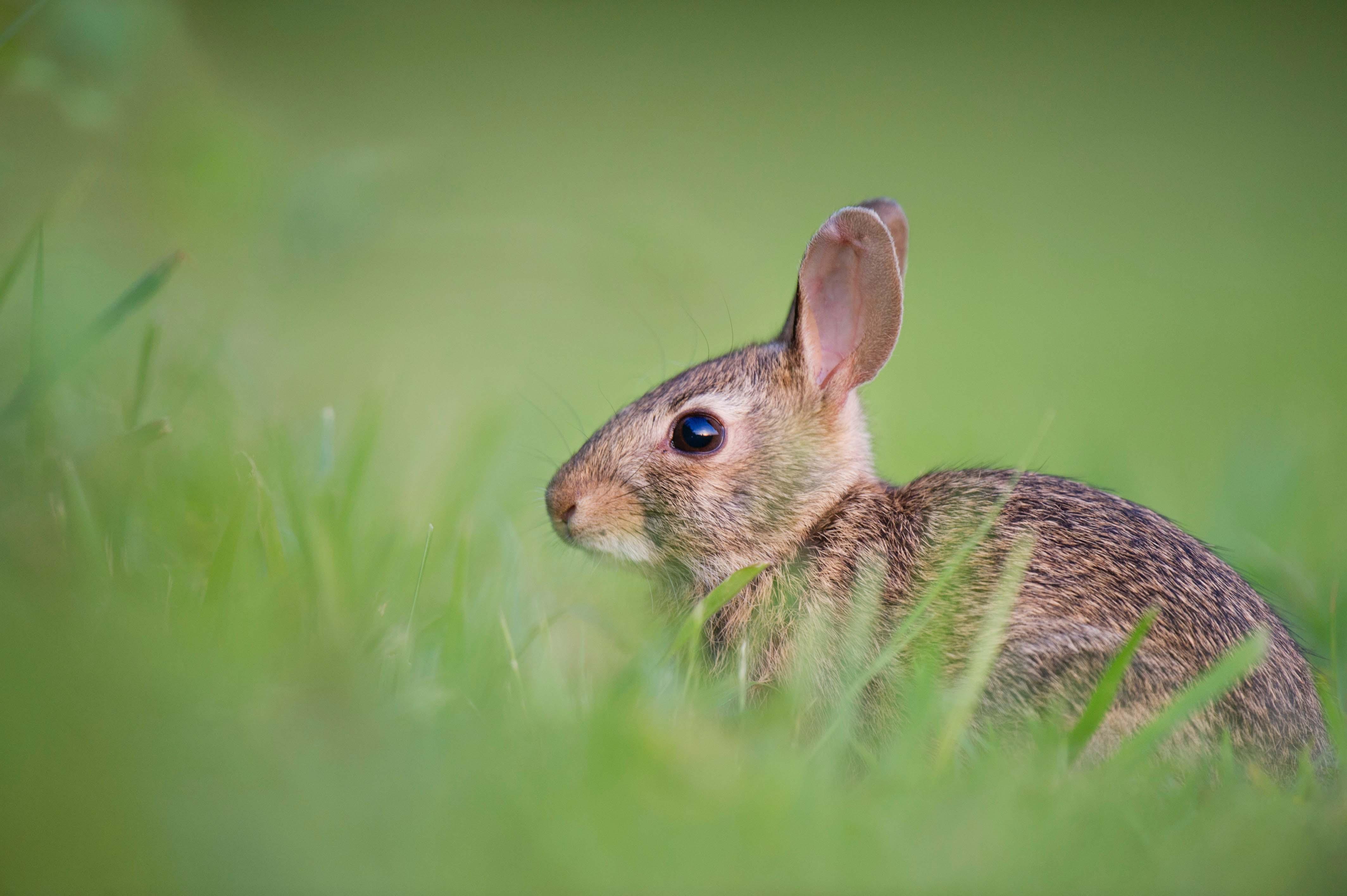 rabbit-ray-hennessy