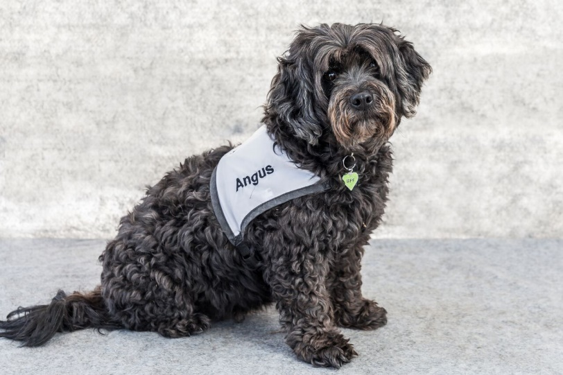 Angus the therapy dog poses outside for camera