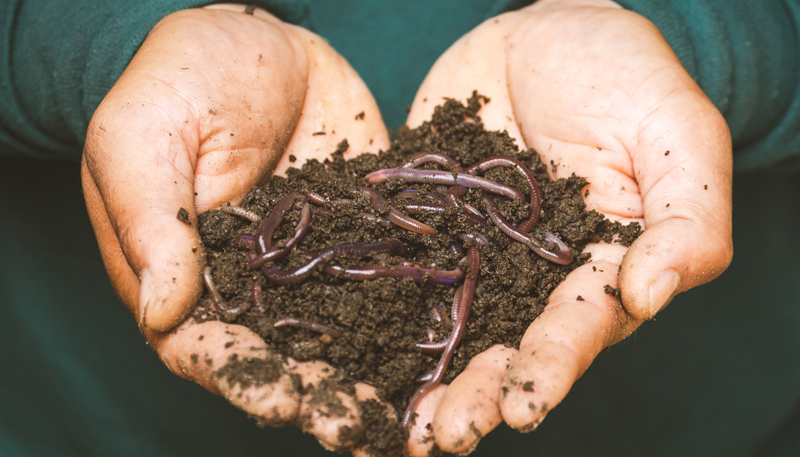 closeup of hands displaying compost and worms