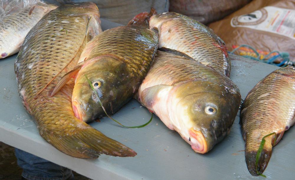 Carpathon fish