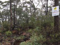 Mount Alexandra Reserve