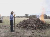 Farmer and pile burn in rural setting
